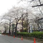 隅田川の桜 東京都墨田区 2021.03.24
